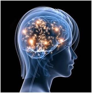 neuropsicologia-cerebro