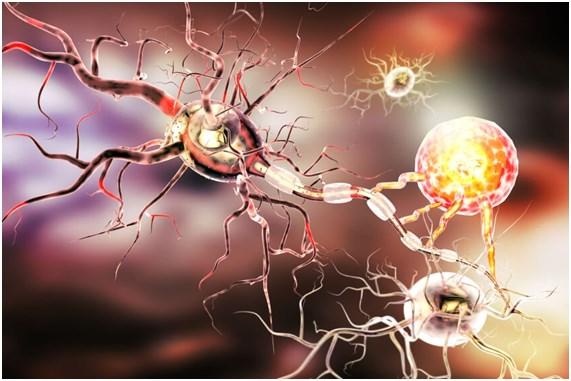 neuropsicologia-gipuzkoa